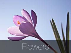Gallery - Flowers